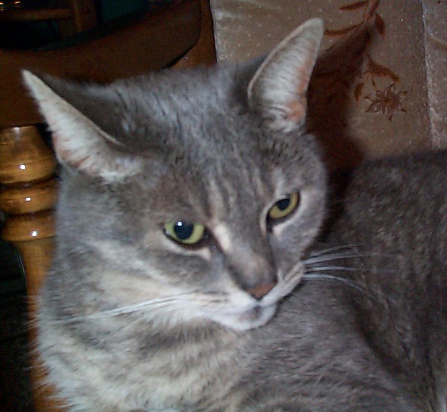 Dea, my cat.